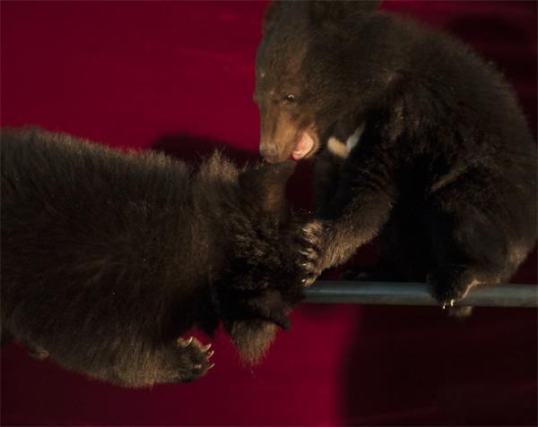 2016春节动物森林庙会 在线订票-展览馆剧场-中票在线