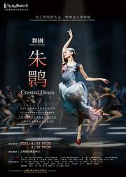 第一届当代精品舞剧演出季 舞剧《朱鹮》